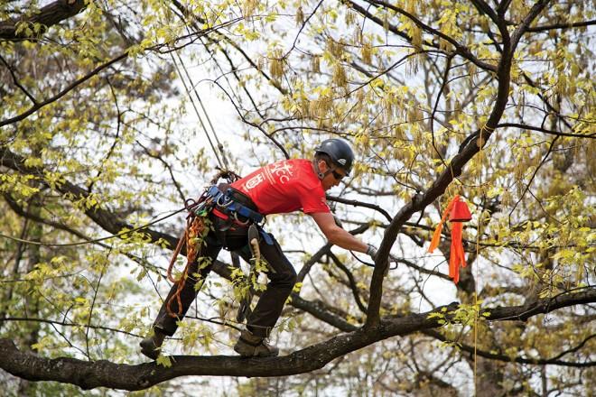 tree climbing sondrio